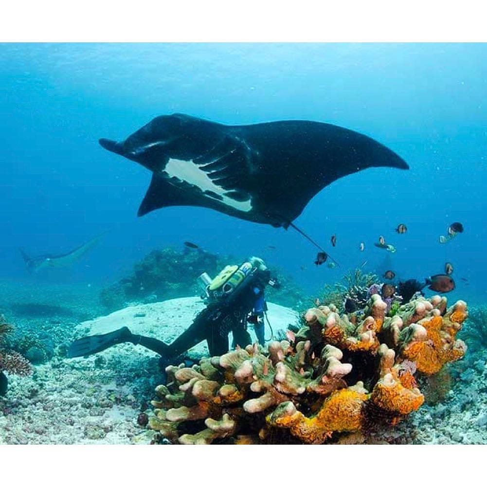 How to Choose Your First Komodo Diving LiveaboardHow to Choose Your First Komodo Diving Liveaboard