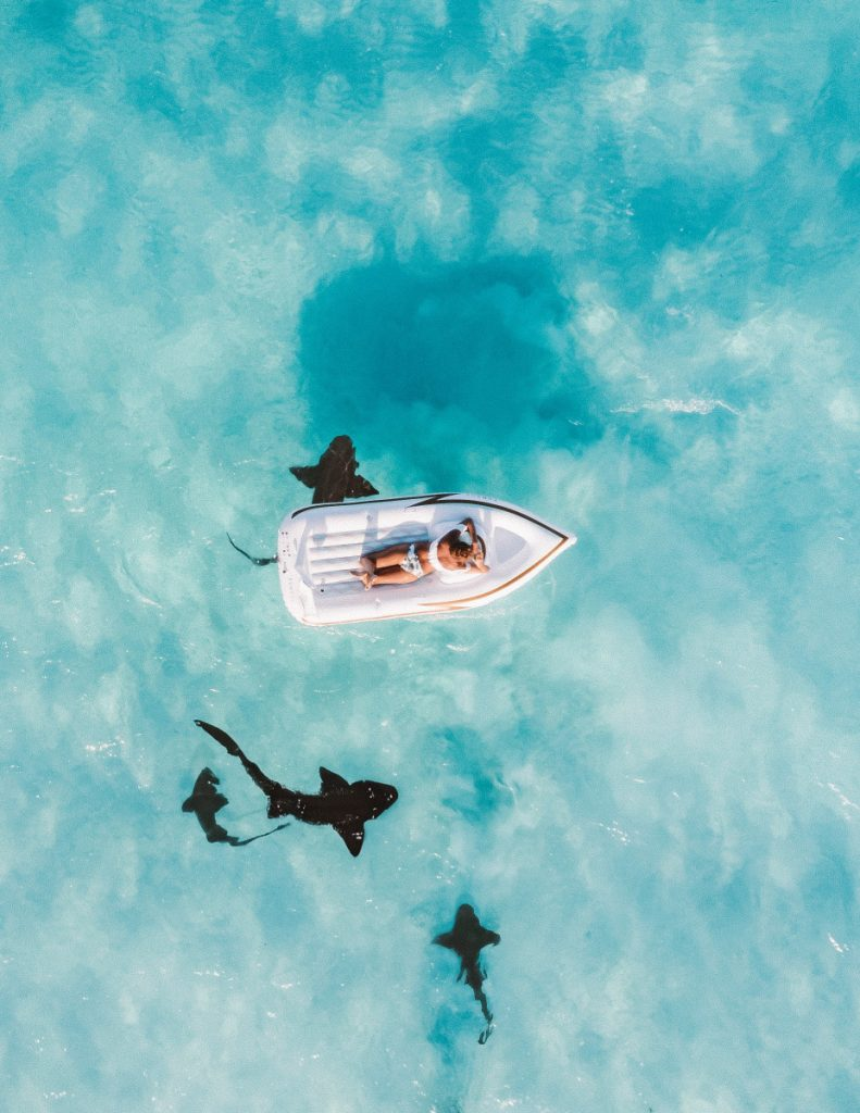 Travel Idea to Shark-Seeing