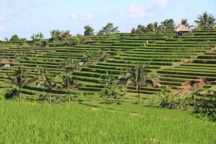 Jatiluwih Rice Terrace as one of the romantic and affordable destination in Bali on a honeymoon